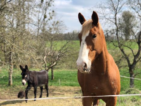 Unser Pferd Gusty und Esel Sina
